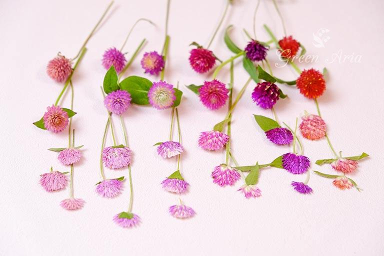 ドライフラワーと生のお花と押し花を種類別に並べています。