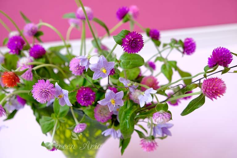 星形の紫のお花、ヤマホロシと千日紅