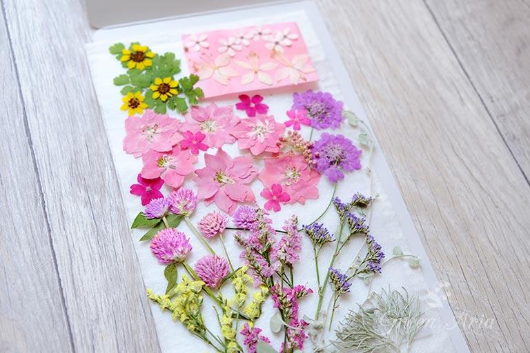 ピンクや紫のエレガントなイメージの押し花を集めたもの