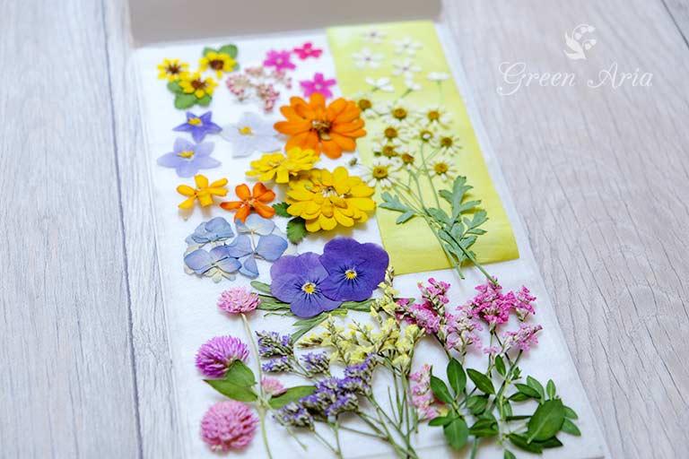 黄色やオレンジのジニアや紫のビオラ、千日紅、黄色いお花の押し花パック