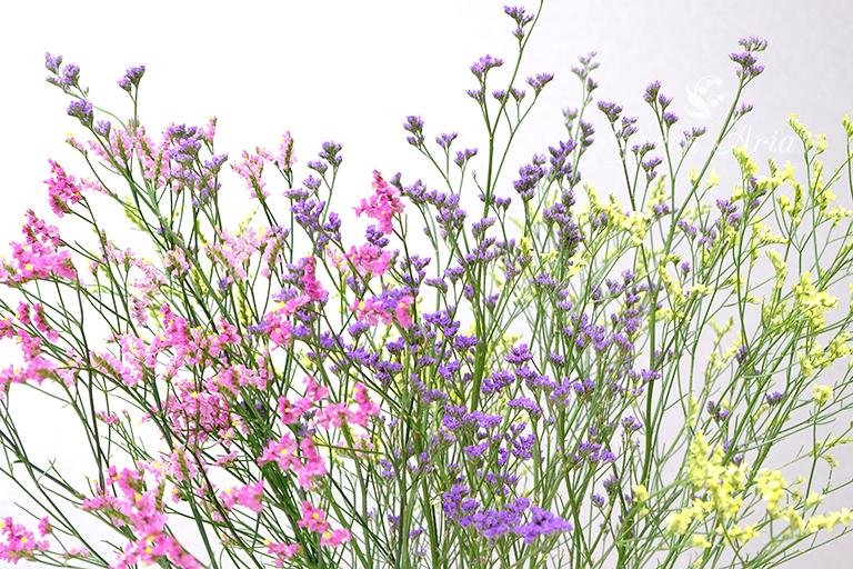ピンクと紫、イエローのスターチス