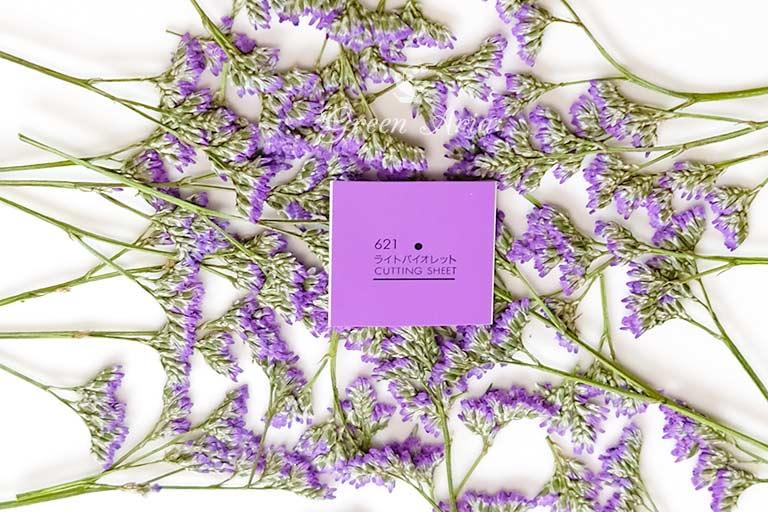 紫のスターチスの押し花