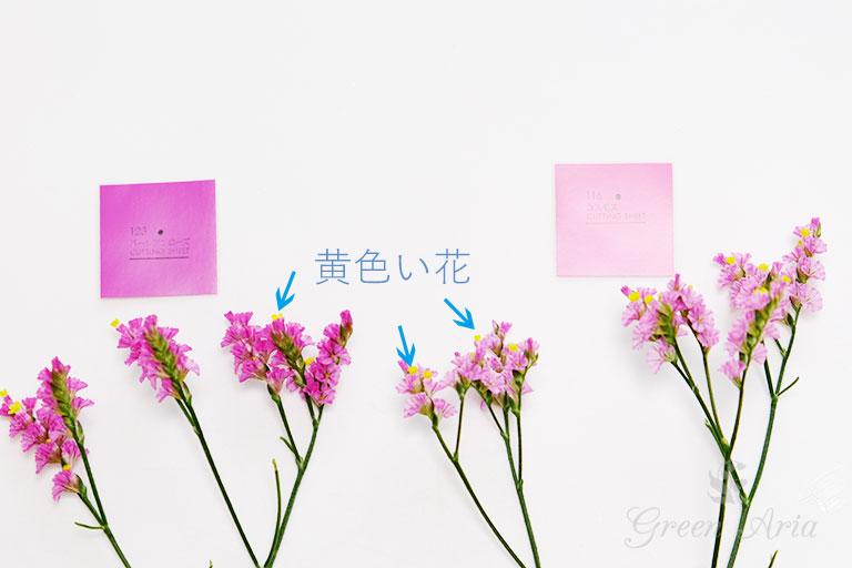 スターチスの濃いピンクと薄いピンクの生花