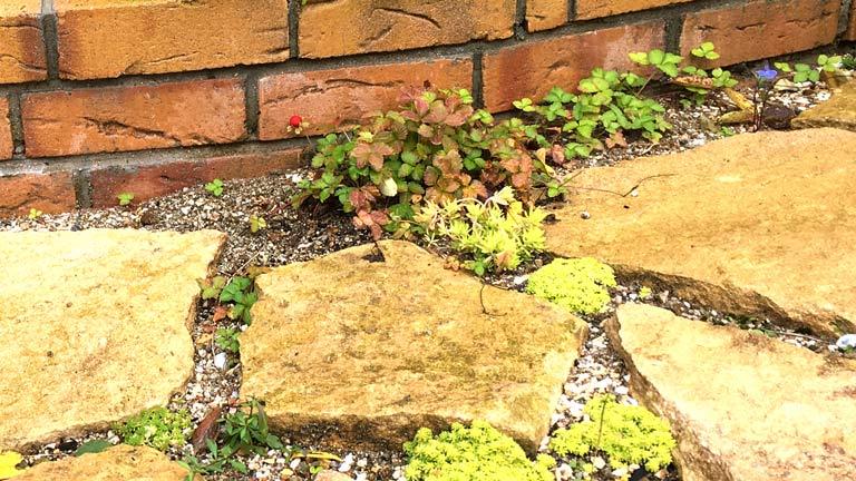 レンガの花壇の足下にヘビイチゴが植えられている
