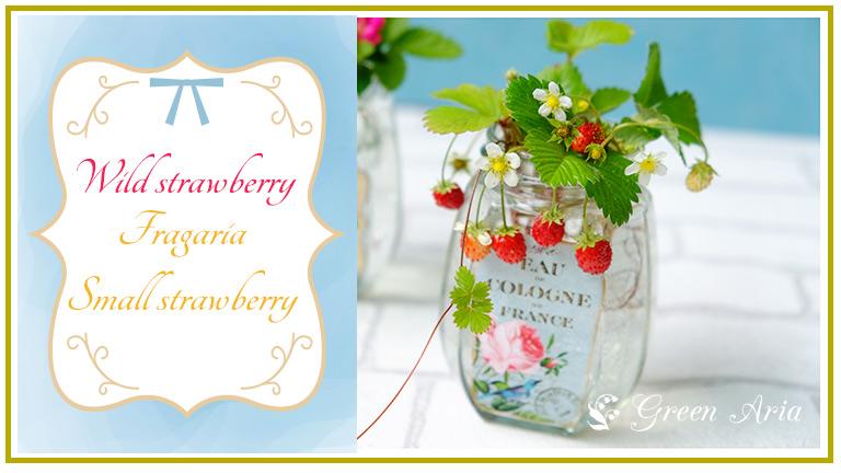バラのシールが貼られたガラスの瓶にワイルドストロベリーが生けられている。