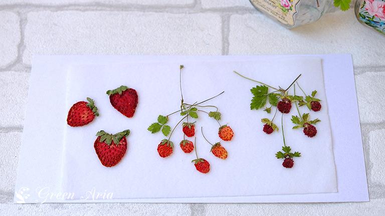 オランダイチゴ・ワイルドストロベリー・ヘビイチゴの実の押し花花材