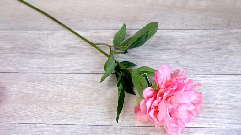 ピオニーの全体。すらりと伸びた咲きにピンクの大きなお花と三枚に分かれた葉っぱがついている