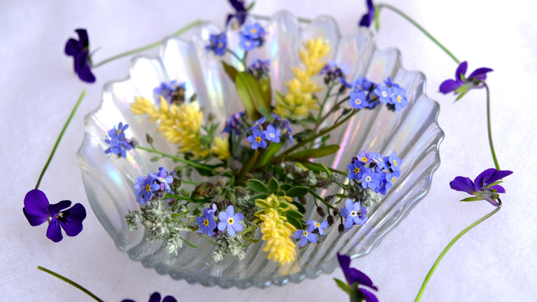 マイクロビオラと黄色い葉、水色のワスレナグサを貝型のガラスの皿で飾る。