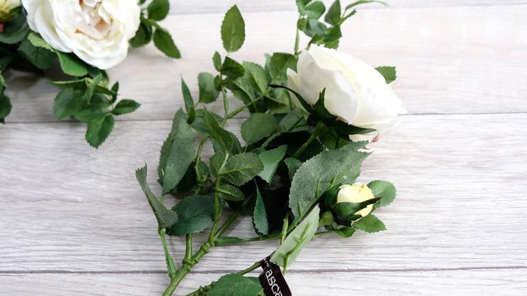 白くふわっとした花姿が特徴の白薔薇。