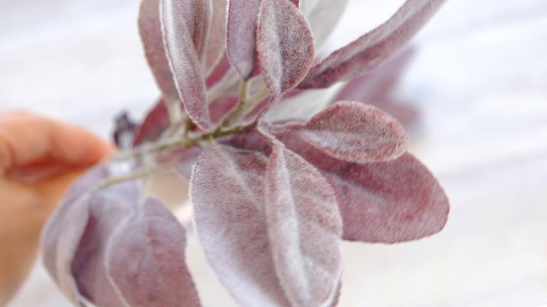 珍しい色の赤茶グレーの葉っぱ。ASCAのラムズイヤー。