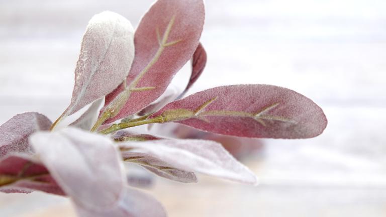 赤茶色の葉っぱは、楕円形で表は白っぽく裏が濃い色