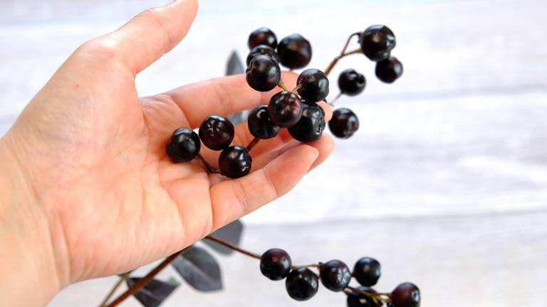 小指の先ほどの黒いプリッとした実は、食べられそうなくらい。A-49025ブランチベリー。