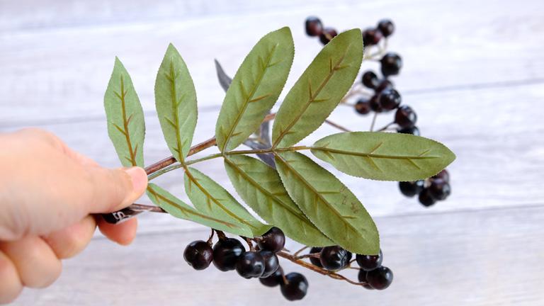 ブランチベリーA-49025の黒い葉の裏側は、明るいグリーン。葉脈もあるクオリティー高いA-49025。