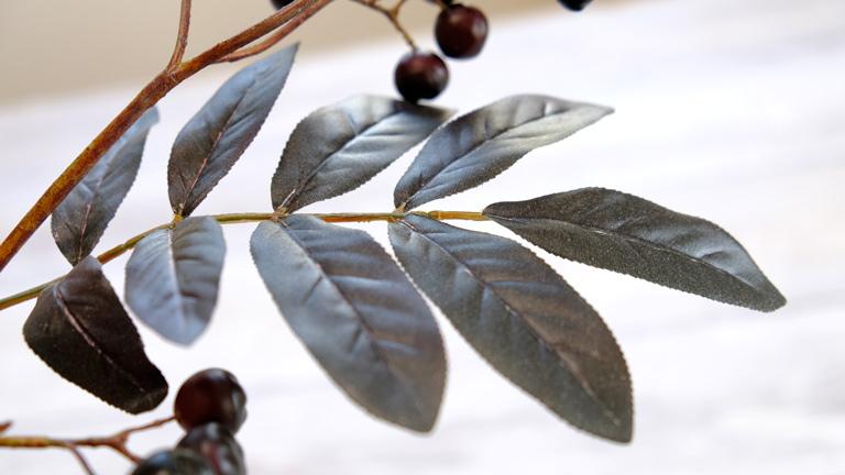 黒く対になった葉っぱのブランチベリー