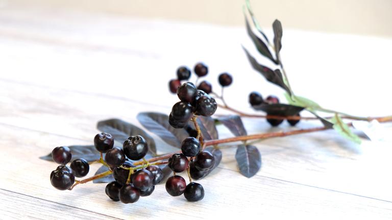 黒くプリッとした実が30個以上付いた枝。黒い葉も特徴的なアスカA-49025。