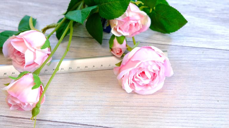 ころんとしたライトピンクのローズ花径を計っているところ