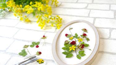 ヘビイチゴの押し花