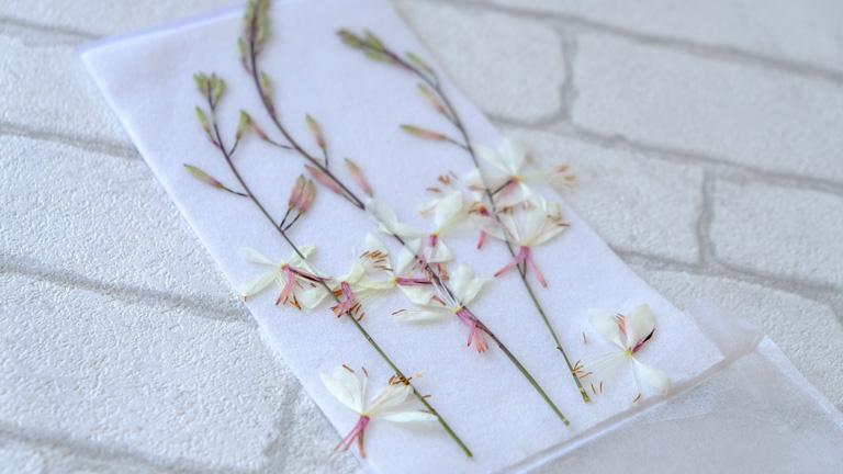 ガウラの茎を3本入れた押し花パック。