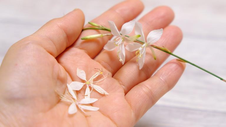 生花と押し花のガウラを手のひらにのせてみている。