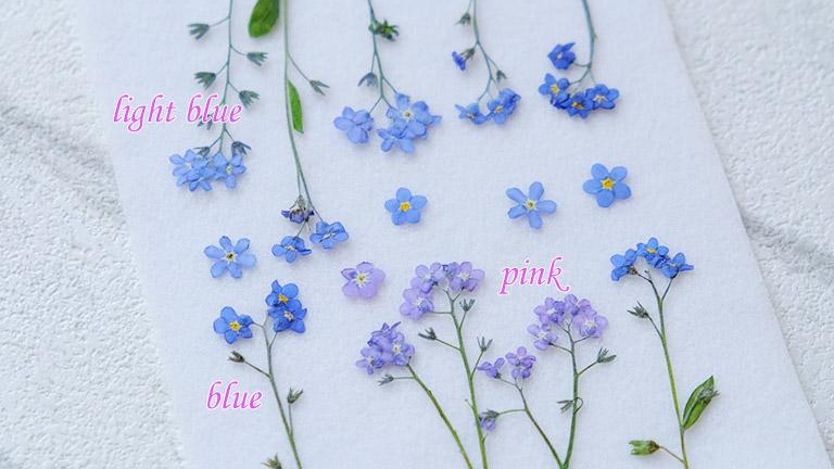 ワスレナグサの押し花