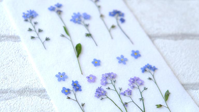 押し花になった忘れな草。