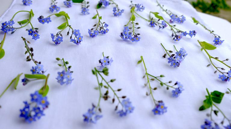 水色の忘れな草を20本ほど白いハンカチにのせている。