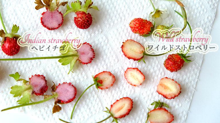 ヘビイチゴとワイルドストロベリーを半分にカットしたところ。ヘビイチゴは中が薄ピンクで、ワイルドストロベリーは、クリーム色。